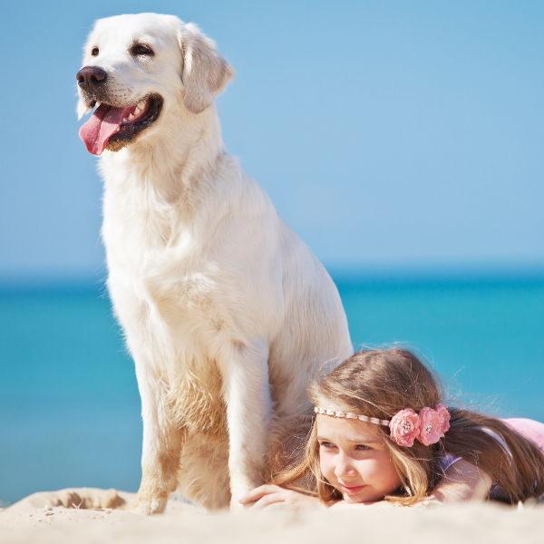Przyjazny dla psów