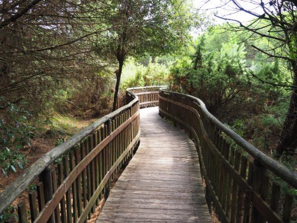 Ogród botaniczny w Porto Caleri